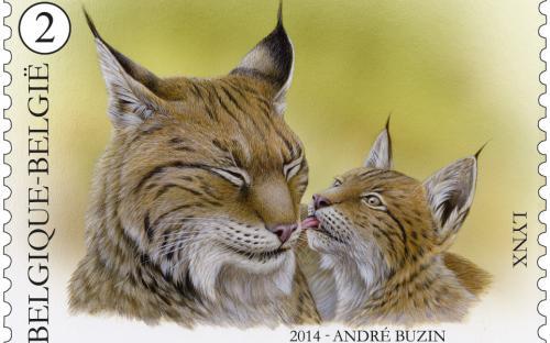 17 februari: Buzin anders (Lynx)
