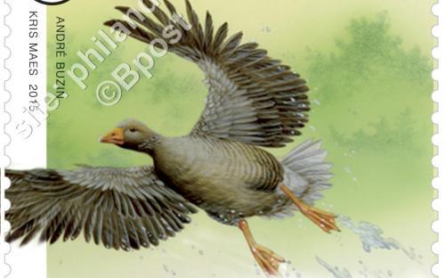23 maart: Dieren in beweging (André Buzin) - Grauwe Gans