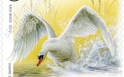 23 maart: Dieren in beweging (André Buzin) - Knobbelzwaan