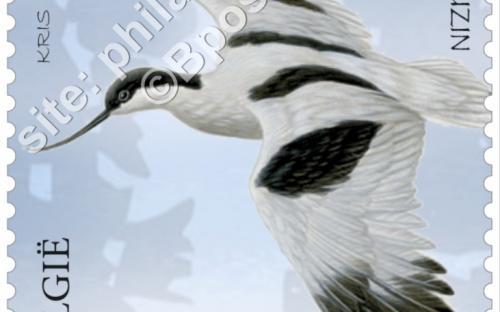 13 juni: Het nieuwe Zwin, Kluut (Recurvirostra Avosetta)