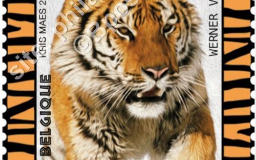 22 augustus: Bedreigde diersoorten, Tijger