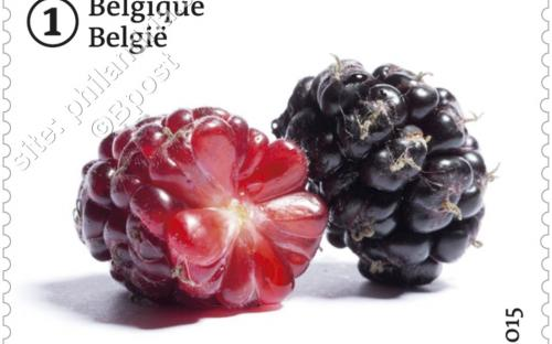 29 juni: Vergeten fruit (Zwarte Moerbei)