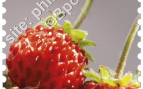 29 juni: Vergeten fruit (Bosaardbeien)