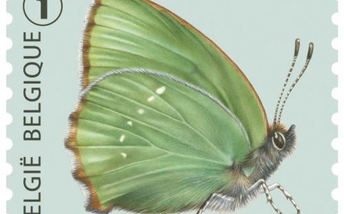 6 oktober: Vlinders van M.Meersman, Groentje (Rolzegel)