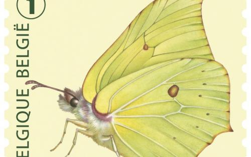 6 oktober: Vlinders van M.Meersman, Citroenvlinder (Rolzegel)