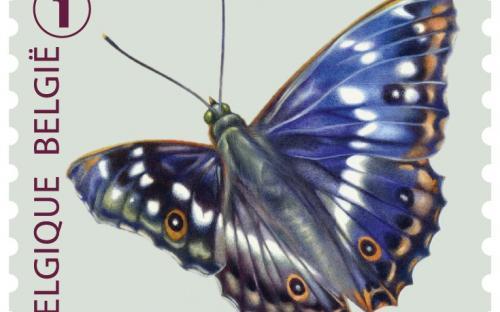 6 oktober: Vlinders van M.Meersman, Kleine Weerschijnvlinder (Rolzegel)