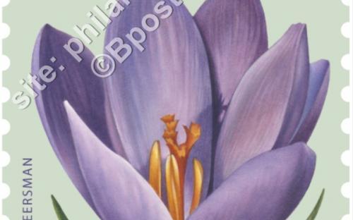 24 oktober: Bloemen, Krokus