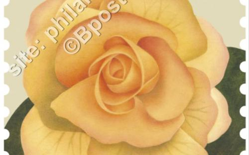 24 oktober: Bloemen, Begonia