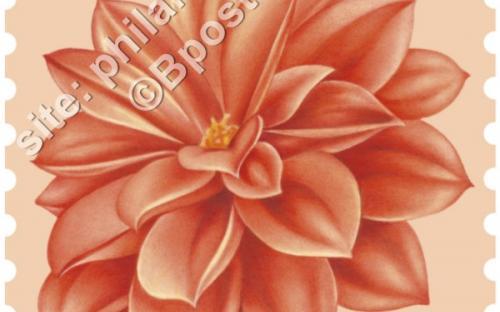 24 oktober: Bloemen, Dahlia