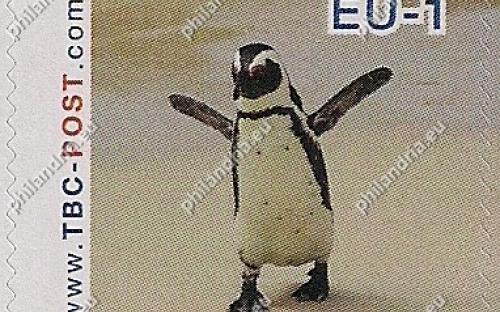 7 augustus: EU-1: Zwartvoetpinguïn (lopend)