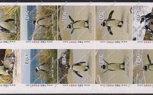 7 augustus: EU-1: Zwartvoetpinguïn (compleet vel)
