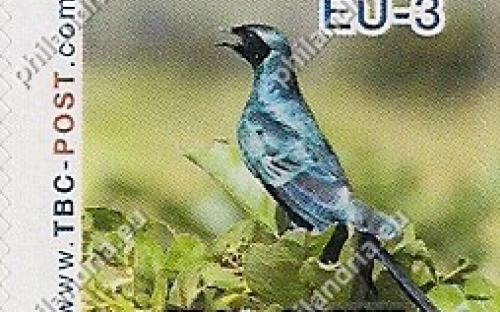20 november: EU-3: Grote glansspreeuw (zijaanzicht)
