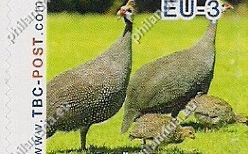 20 november: EU-3: Helmparelhoen (meerdere)