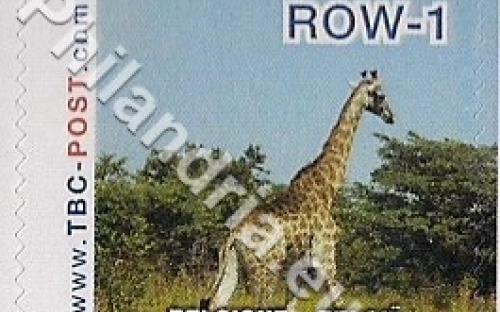 18 februari: ROW-1: Giraf 10