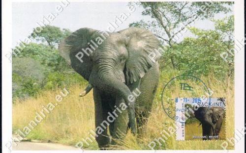 8 november: PACK INT (= KP INTER): Olifant (FDCa)